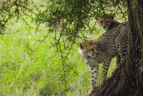 Safari in Africa, consigli utili per un viaggio emozionante