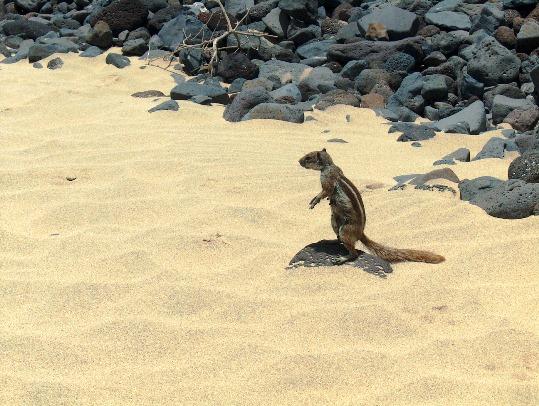 Fuerteventura8_iviaggidimonique