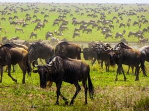 safari-in-Africa-consigli-utili