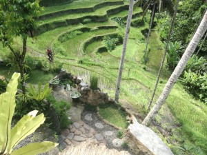 cosa vedere a Bali risaie Tegalalang