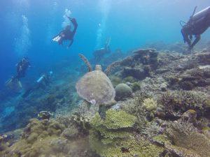 dove-quando-andare-mare-malesia-estate-snorkeling-borneo