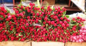 Visitare Amsterdam tulipani