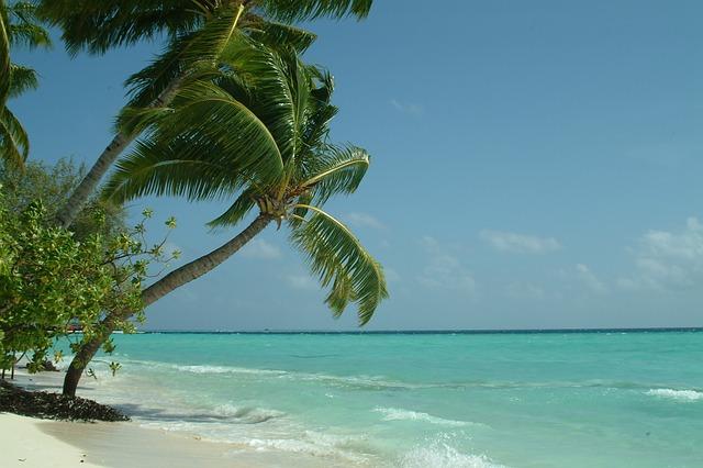 maldive-guesthouse