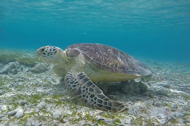 mare-a-bali-isole-gili-tartarughe